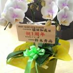 1周年祝いに胡蝶蘭をいただききました!